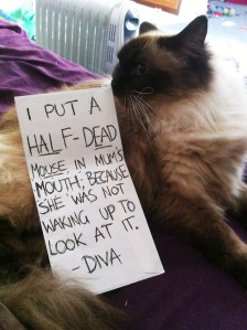 cat shaming catshaming i took a half dead mouse and put it in my mums mouth lol meme wtf