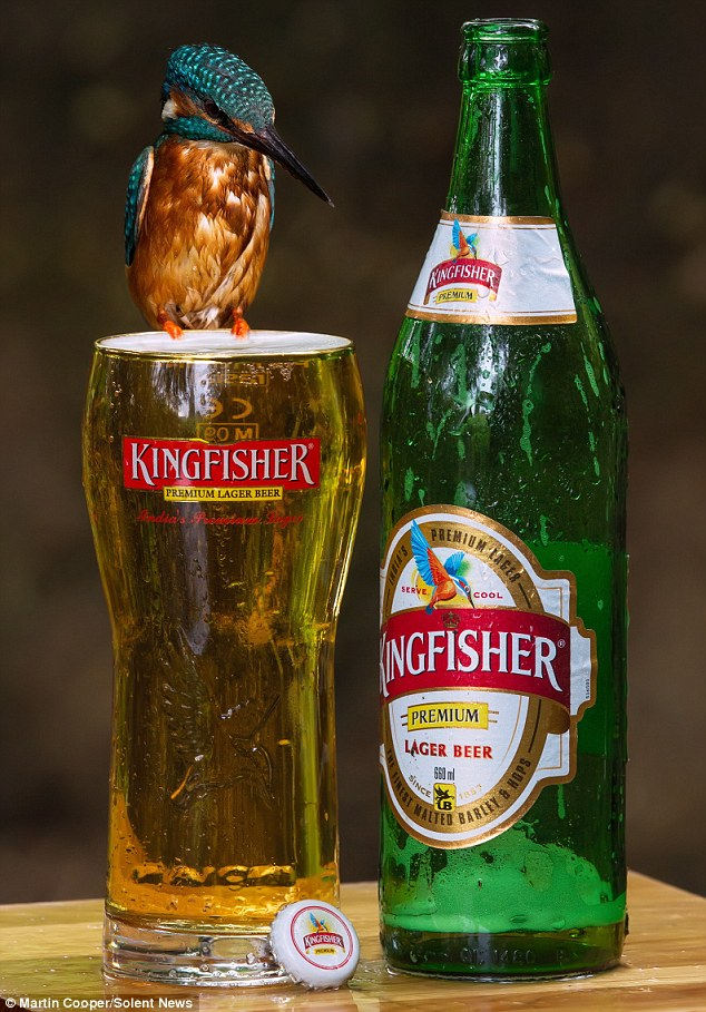 Kingfisher beer can wallpaper